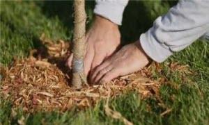 начало садовых работ, огородные работы