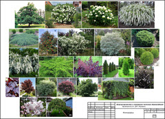 Журавли фото растений