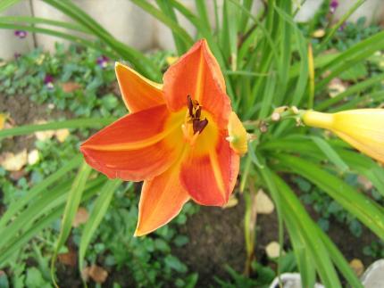 Ландшафтный дизайн, цветочная рассада