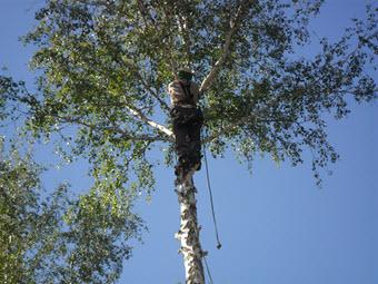 обрезка деревьев в Челябинске