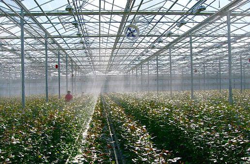 система туманообразования в теплице, кафе, ресторан, туманообразование, установка тумана